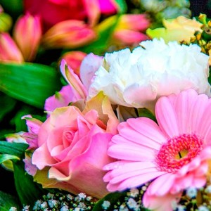 Abonament de flori - Сlasic